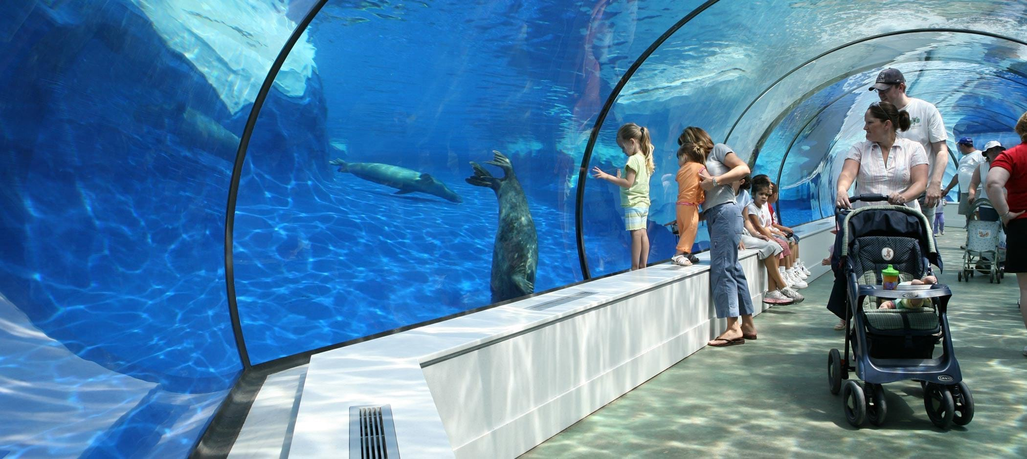 Detroit Zoo seals underwater