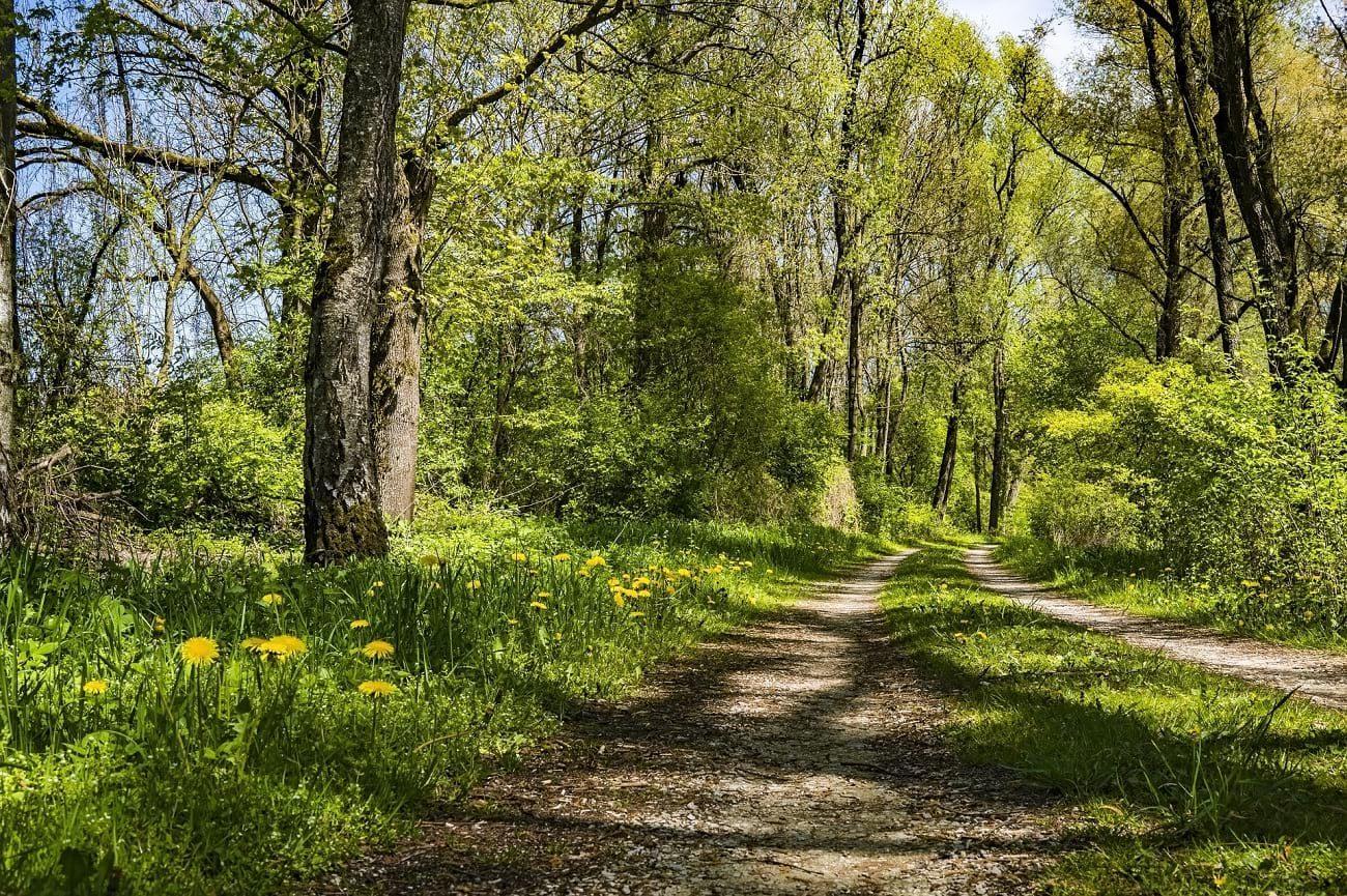 hiking trails in Michigan