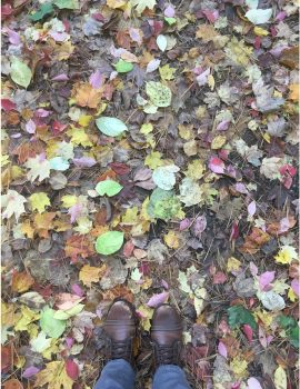 Leaves at Cranbrook