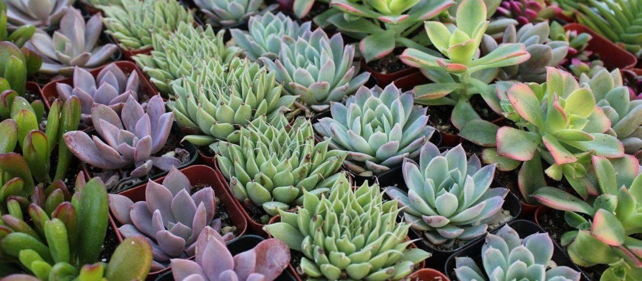 Success-with-Succulents-Garden-Workshop
