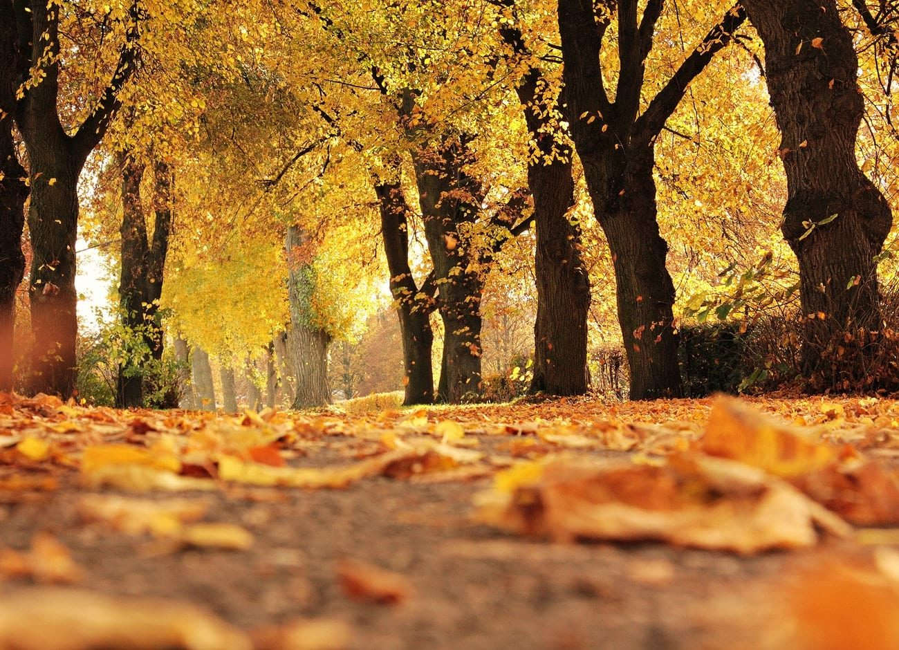 Fall in Michigan